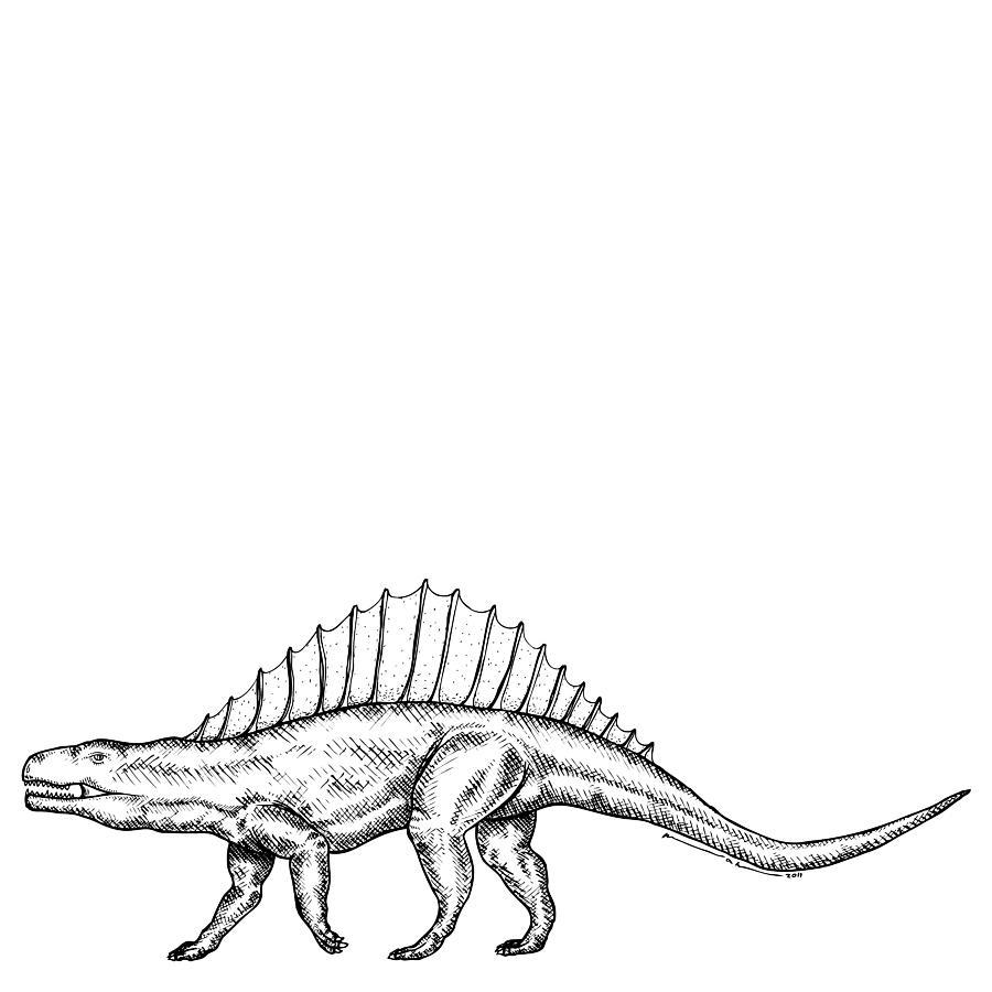 Cartoon Drawing - Dimetrodon - Dinosaur by Karl Addison