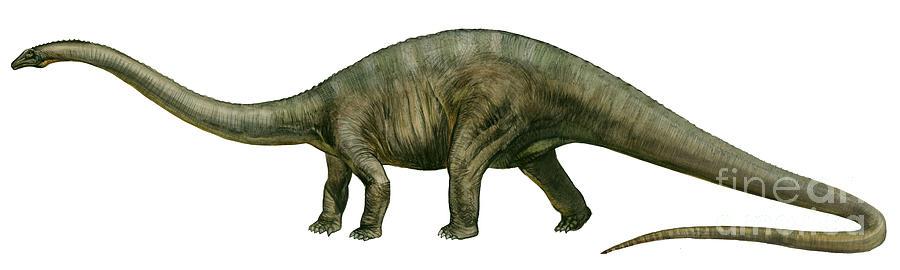 Horizontal Digital Art - Diplodocus, A Prehistoric Era Dinosaur by Sergey Krasovskiy