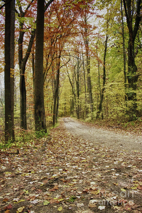 dirt road forest
