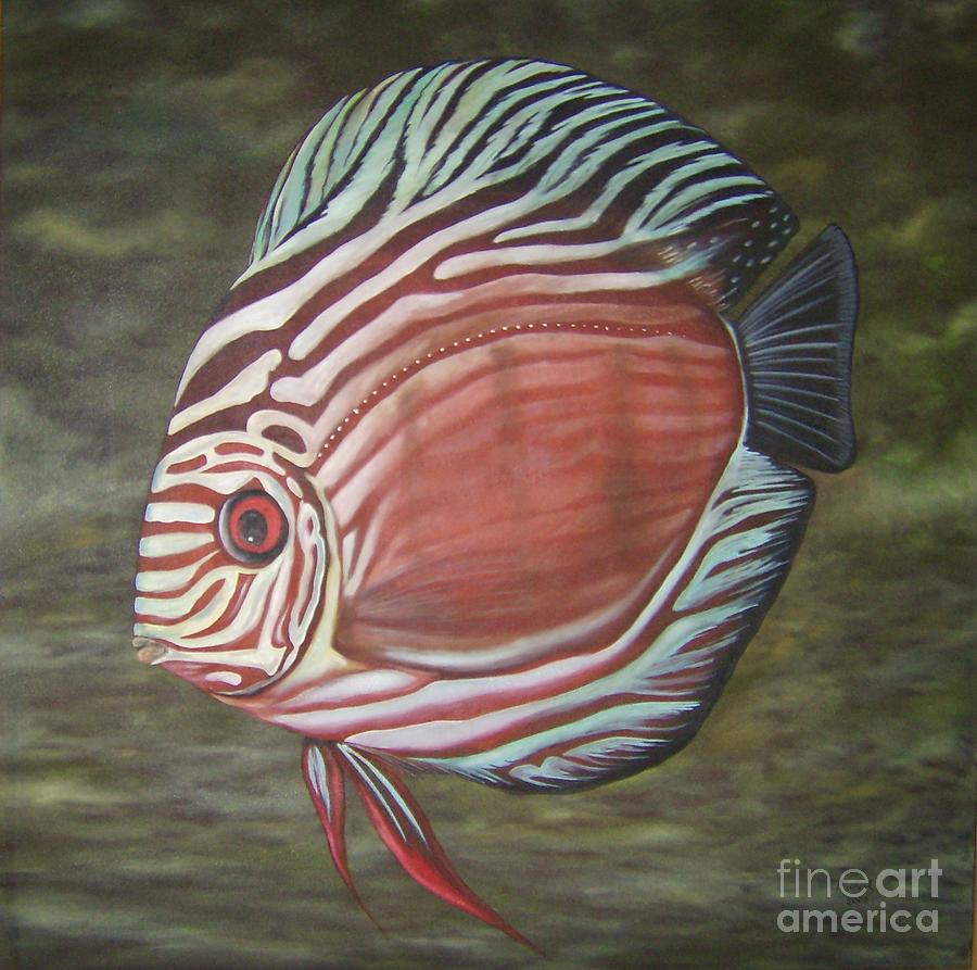 Discus fish for sale florida discus by kevin ragion 2017 for Live discus fish for sale