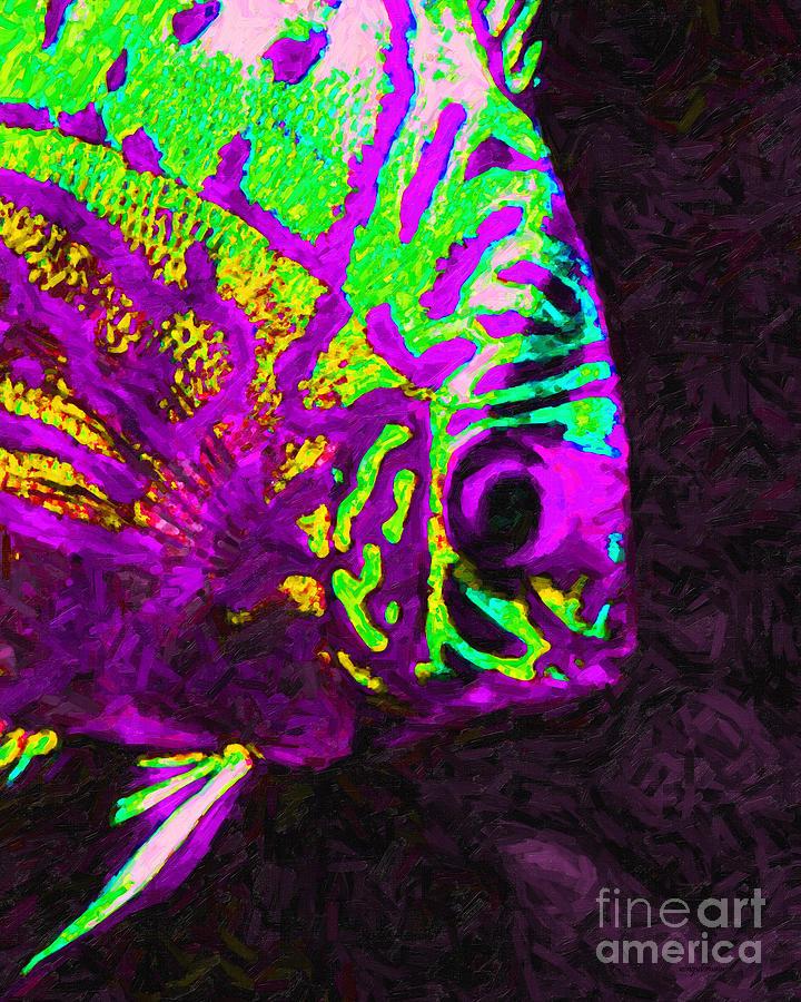 CheckoutSA likewise 7C 7C  freewebs   7Cfishpride 7Coscar 03 additionally E redfinm additionally Mikrogeophagus Ramirezi moreover 1213352149. on oscar cichlids for sale