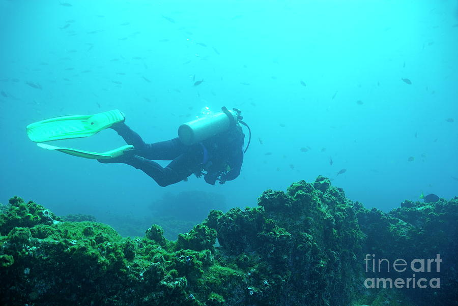 Diver By Rocks On Ocean Floor Photograph