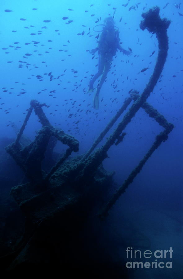 Diver Exploring The Dalton Shipwreck With A School Of Fish Swimming Photograph