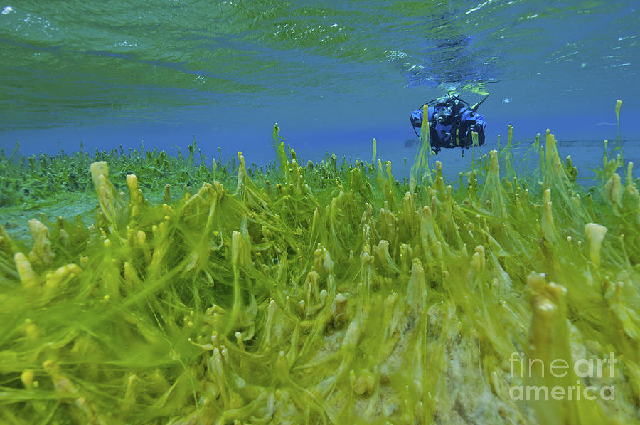 Diver With Fluorescent Green Algae Photograph  - Diver With Fluorescent Green Algae Fine Art Print
