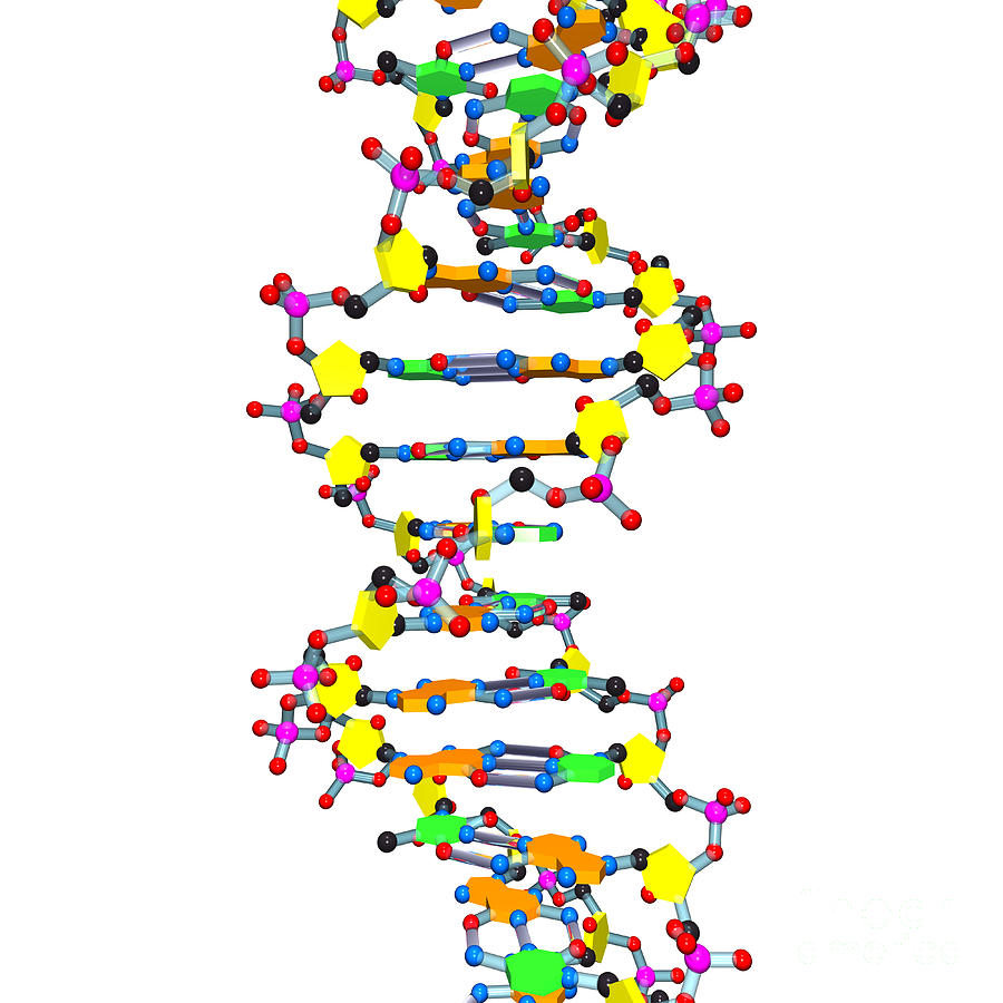 Dna 37 White Digital Art  - Dna 37 White Fine Art Print
