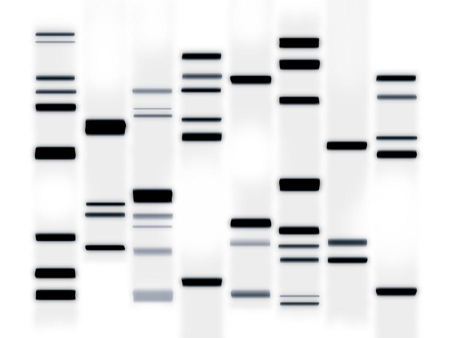 Dna Art Black On White Digital Art