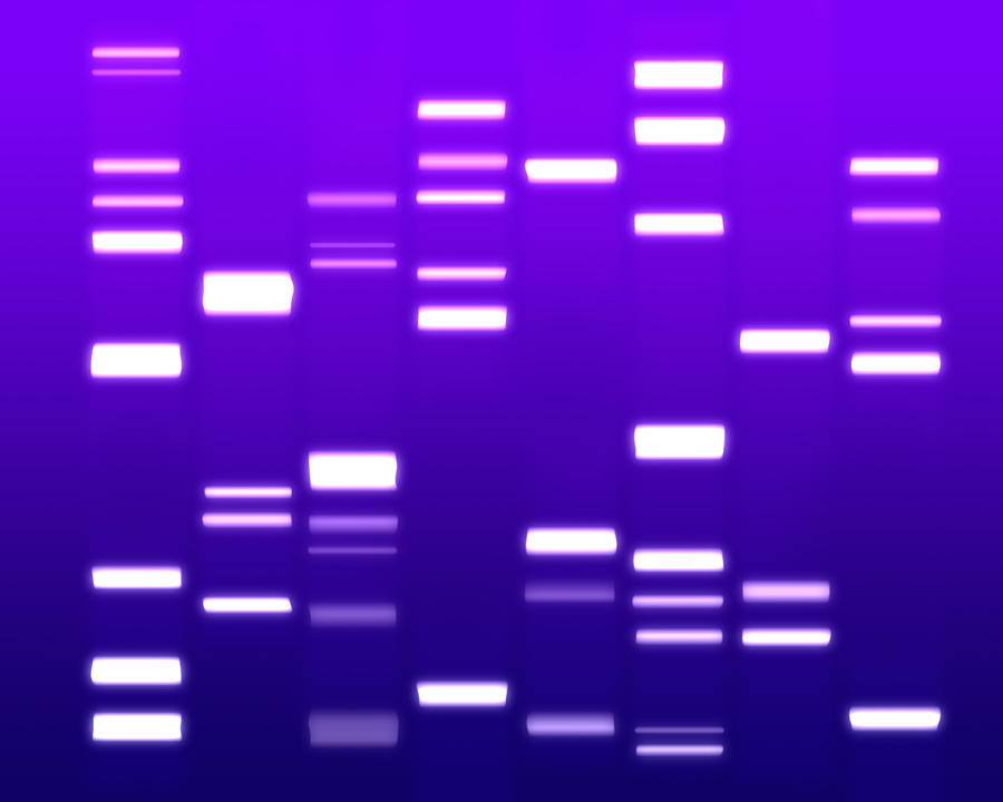 Dna Purple Digital Art  - Dna Purple Fine Art Print