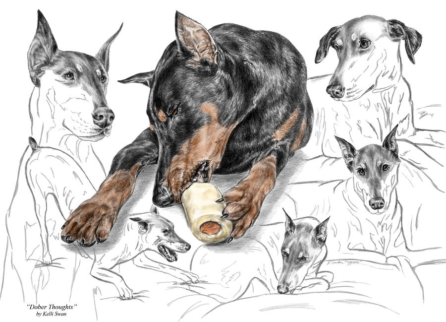 Dober thoughts doberman pinscher montage print color tinted drawing