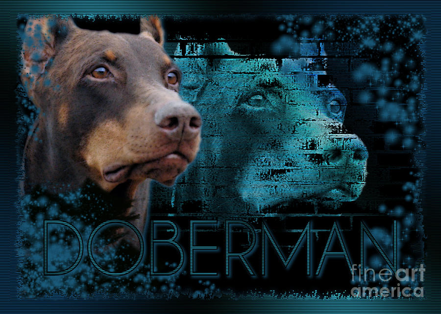 - doberman--blue-eternity-renae-frankz