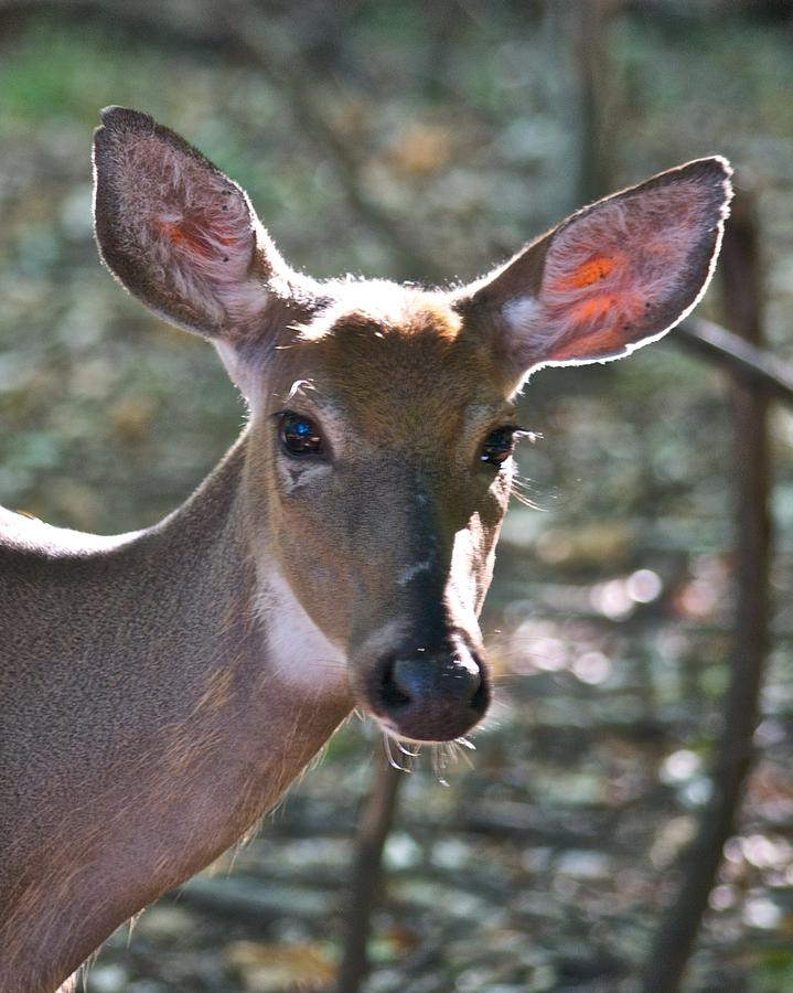Doe Profile 9736 Photograph