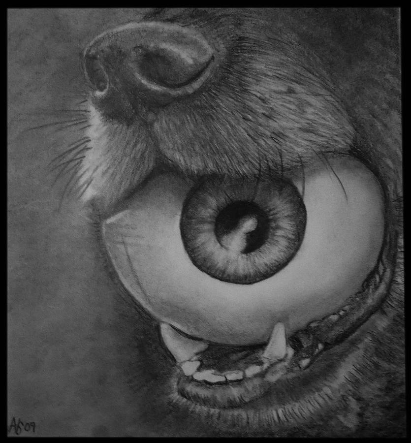 - dog-and-eye-ball-alycia-fraser