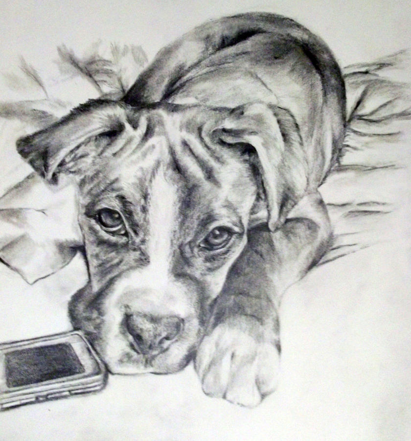 Boxer Dog Sketches Images & Pictures - Becuo