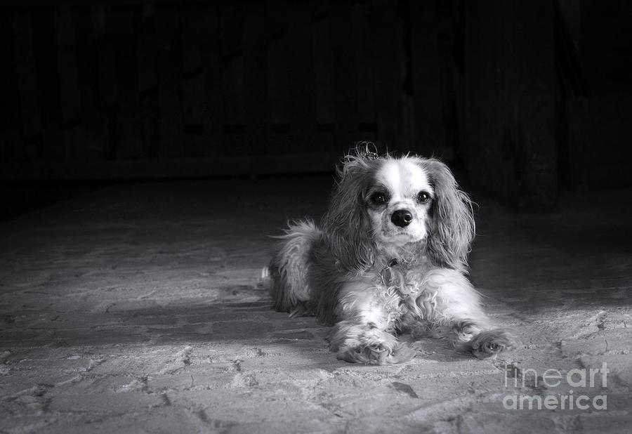 Adorable Photograph - Dog Black And White by Jane Rix