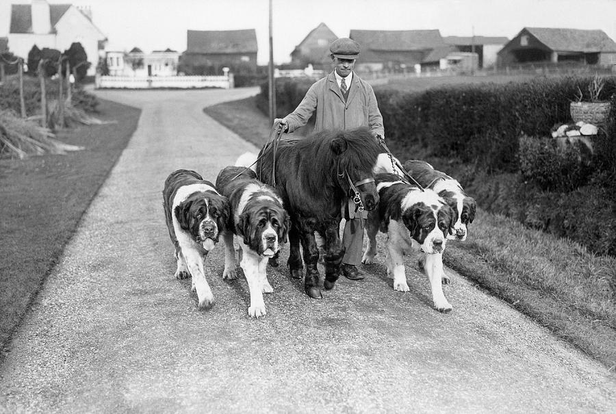 Dog Breeders Photograph