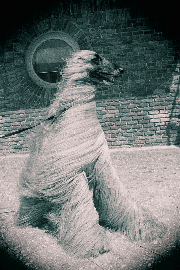Dog In The Wind.  Photograph