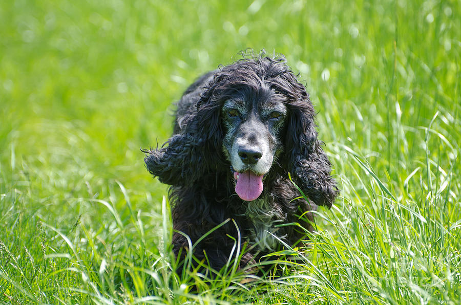 Dog On The Grass Photograph