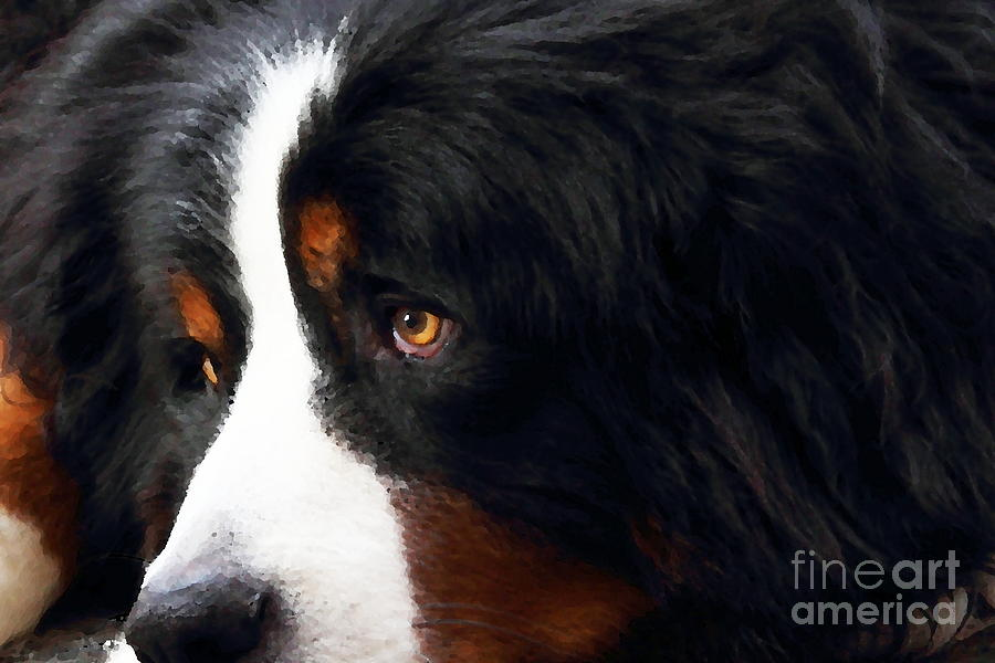 Dog . Photo Artwork Photograph  - Dog . Photo Artwork Fine Art Print