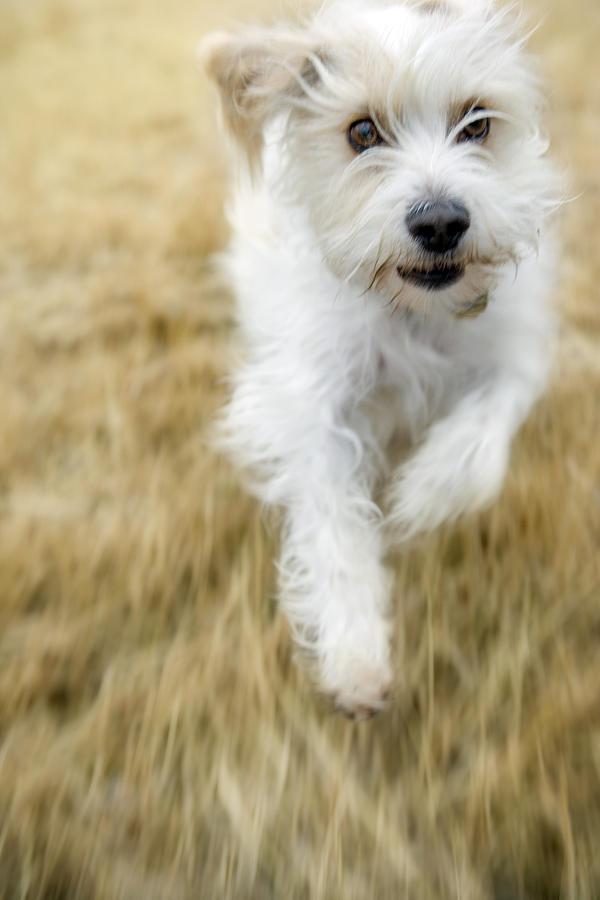Light Photograph - Dog Running by Darwin Wiggett