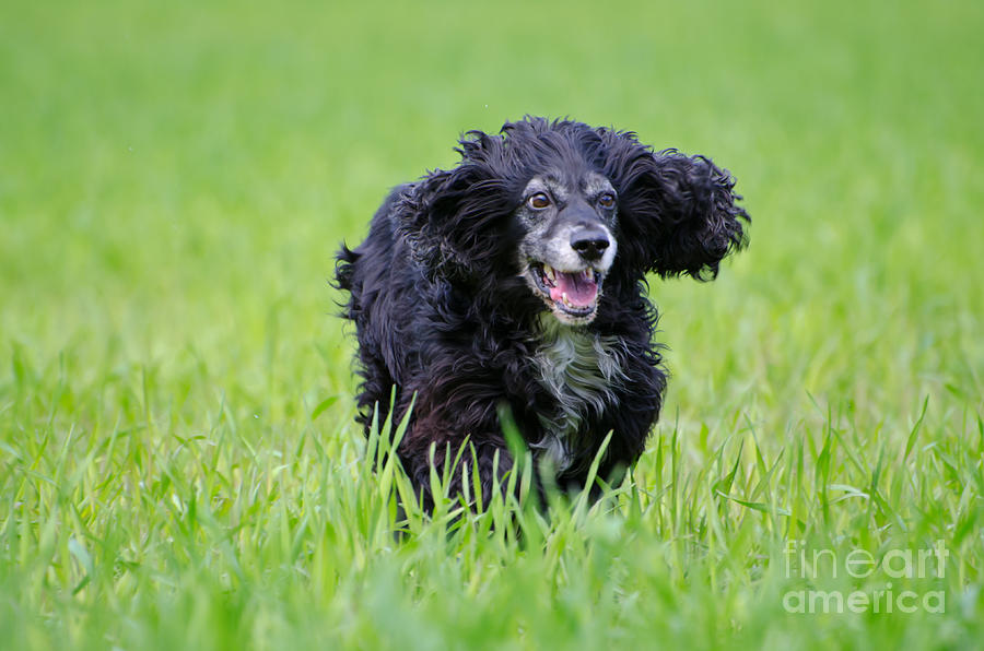 Dog Running On The Green Field Photograph