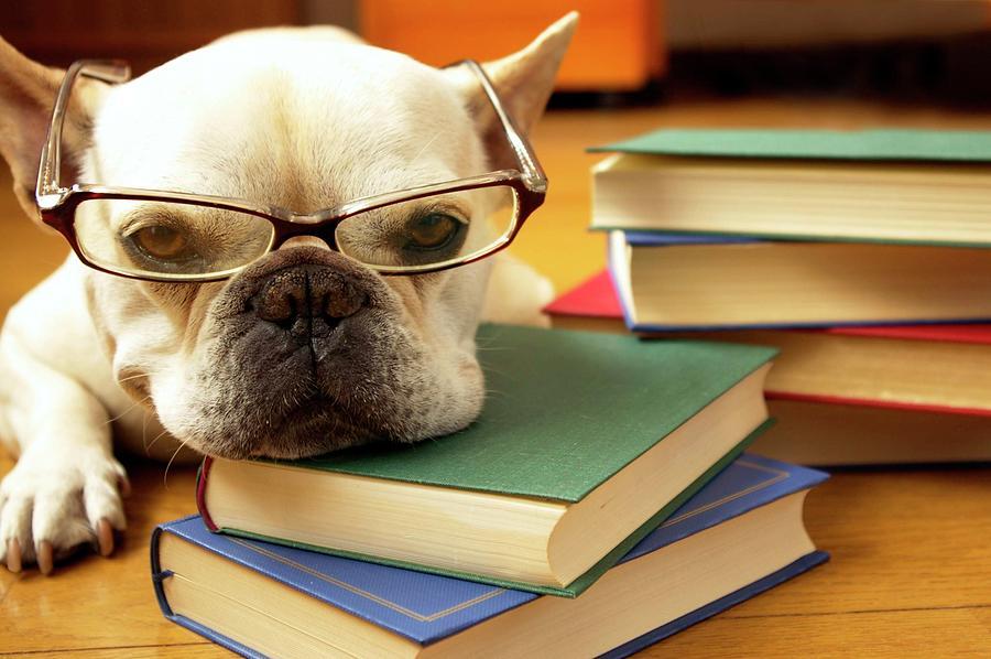 Dog Study Photograph