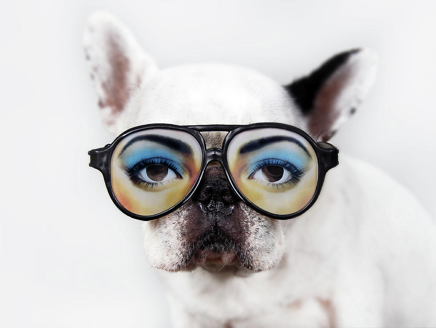 Dog Wear Glasses Photograph  - Dog Wear Glasses Fine Art Print