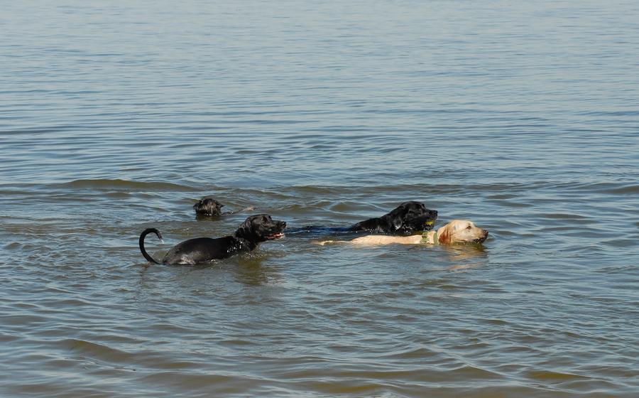 Dog Canvas Prints Photograph - Dogs 32 by Joyce StJames