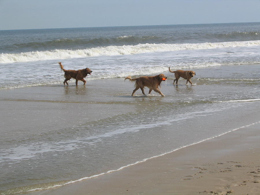 Dogs At The Beach Photograph