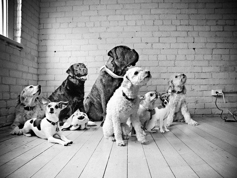 Dogs Watching At A Spot Photograph
