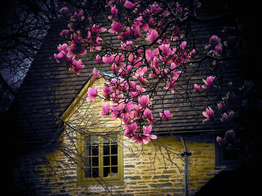 Dogwood By The Window Photograph  - Dogwood By The Window Fine Art Print