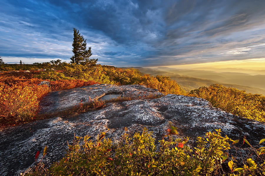 Dolly Sods Wilderness Photograph