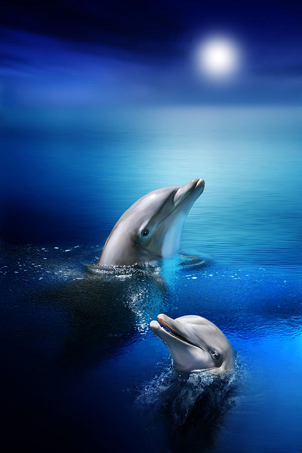 Dolphin Delight Digital Art
