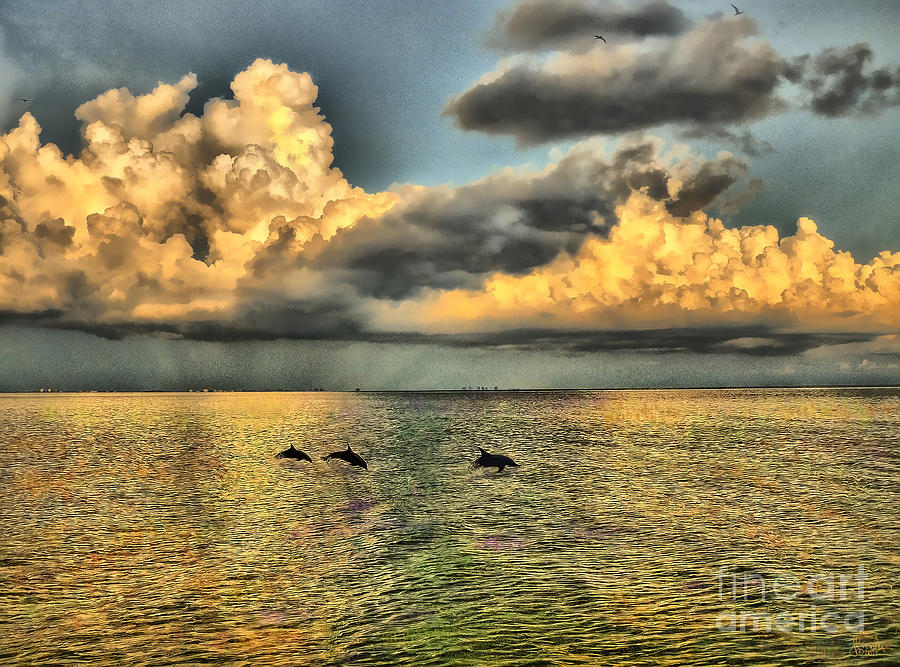 Dolphins Play At Sanibel Island Photograph