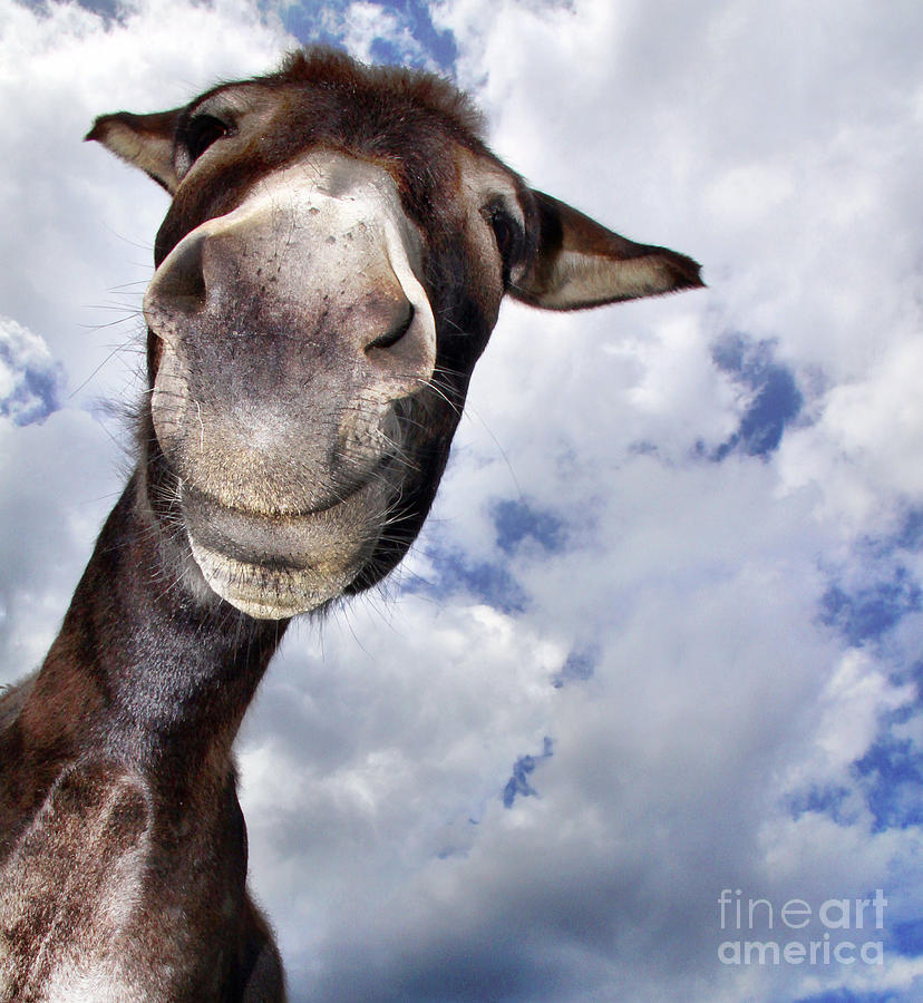 Donkey With Fun Photograph