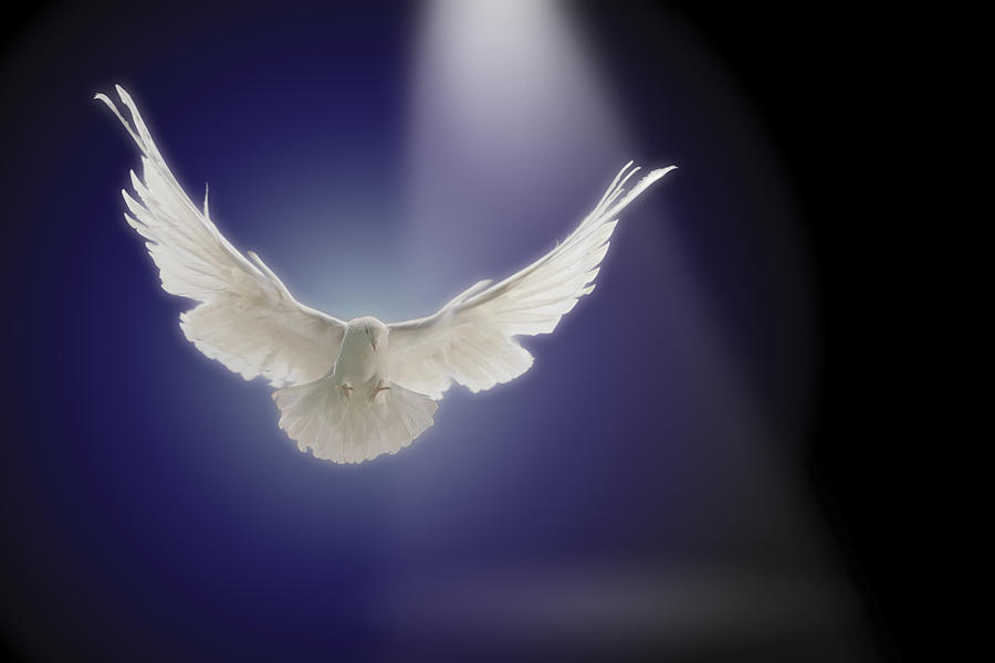 Dove Flying Through Beam Of Light Photograph