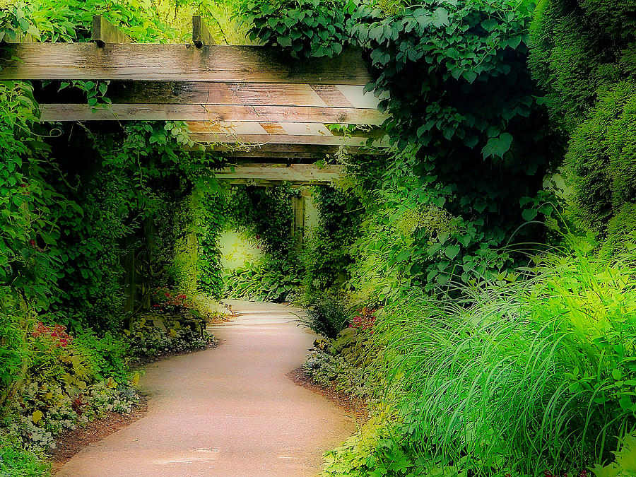 Down The Garden Path Photograph  - Down The Garden Path Fine Art Print
