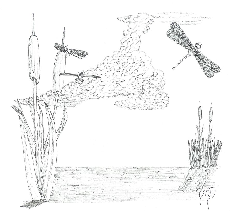 Dragonflies And Cattails - Sketch Drawing