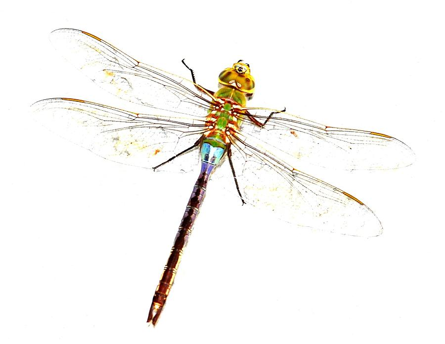 dragonfly clip art printables source abuse report dragonfly clip art ...