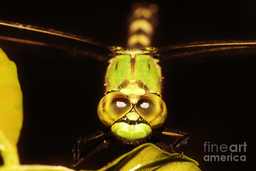 Dragonfly Eyes Photograph