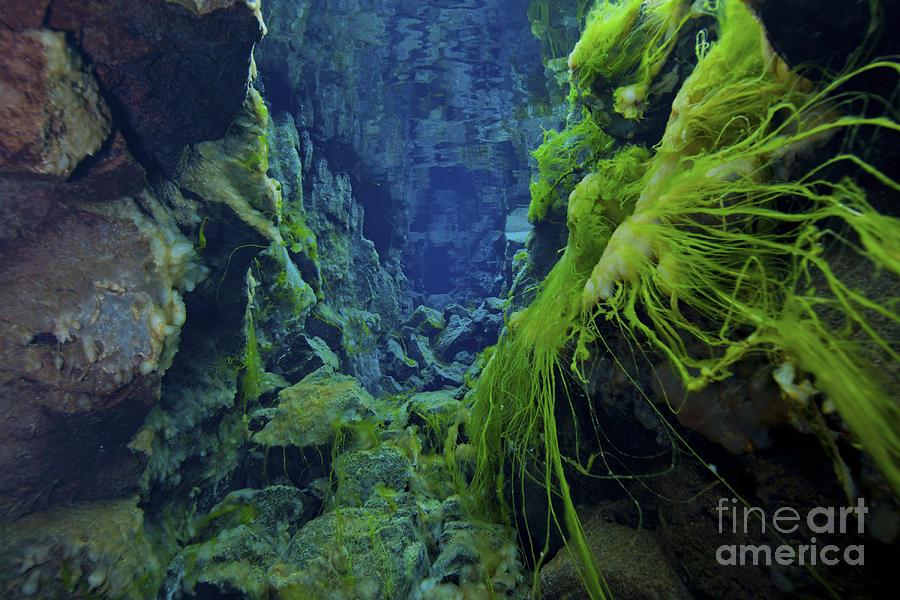 Dramatic Fluorescent Green Algae Photograph