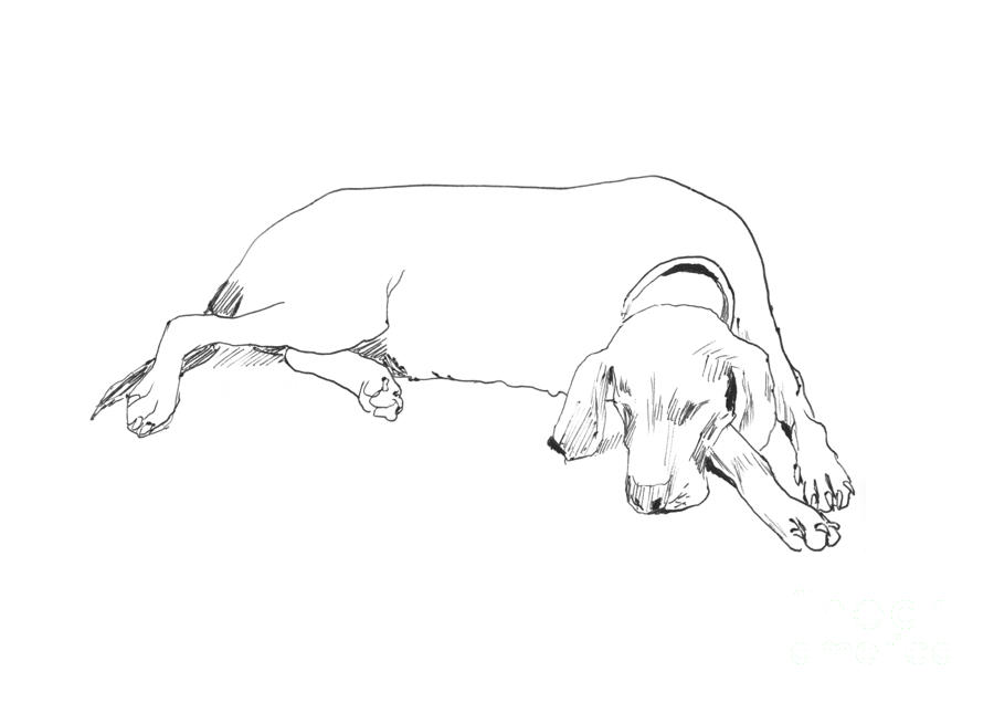 Drawing Of A Resting Dog Drawing  - Drawing Of A Resting Dog Fine Art Print