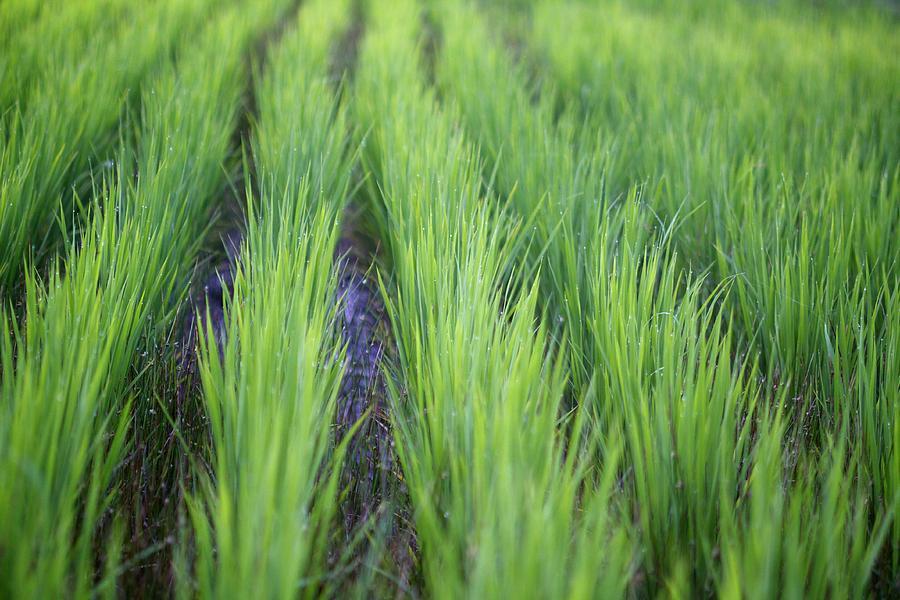 Horizontal Photograph - Dream Like Green by Jasohill Photography