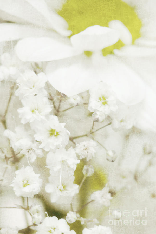 Dreaming Flowers Photograph