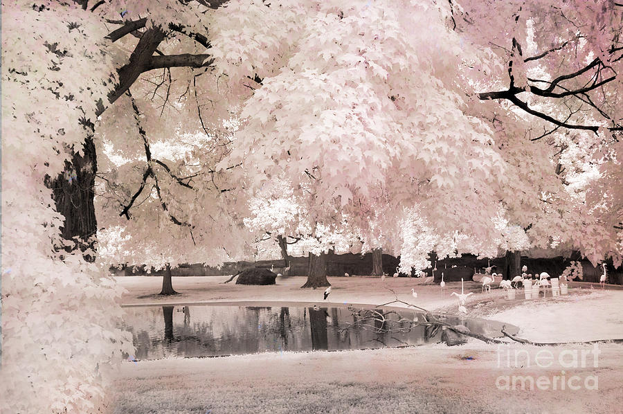 Dreamy Infrared Pink Flamingo Park Photograph  - Dreamy Infrared Pink Flamingo Park Fine Art Print