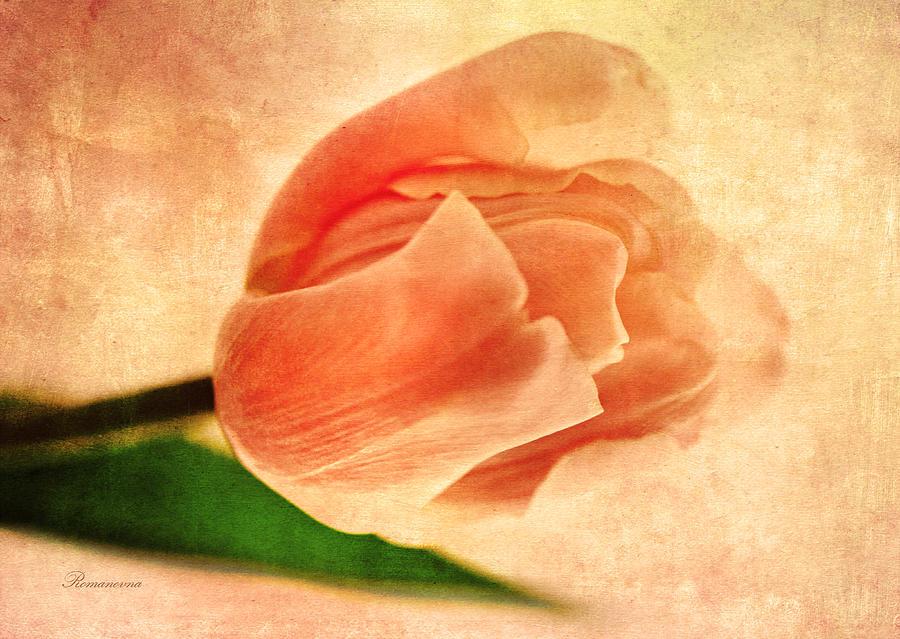 Dreamy Vintage Tulip Mixed Media