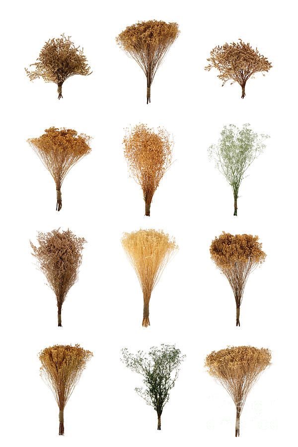 Dried Flowers Collection Photograph  - Dried Flowers Collection Fine Art Print