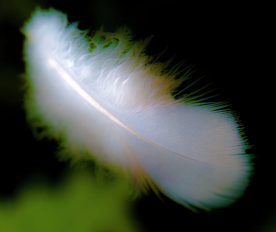 Driftingfeather Photograph
