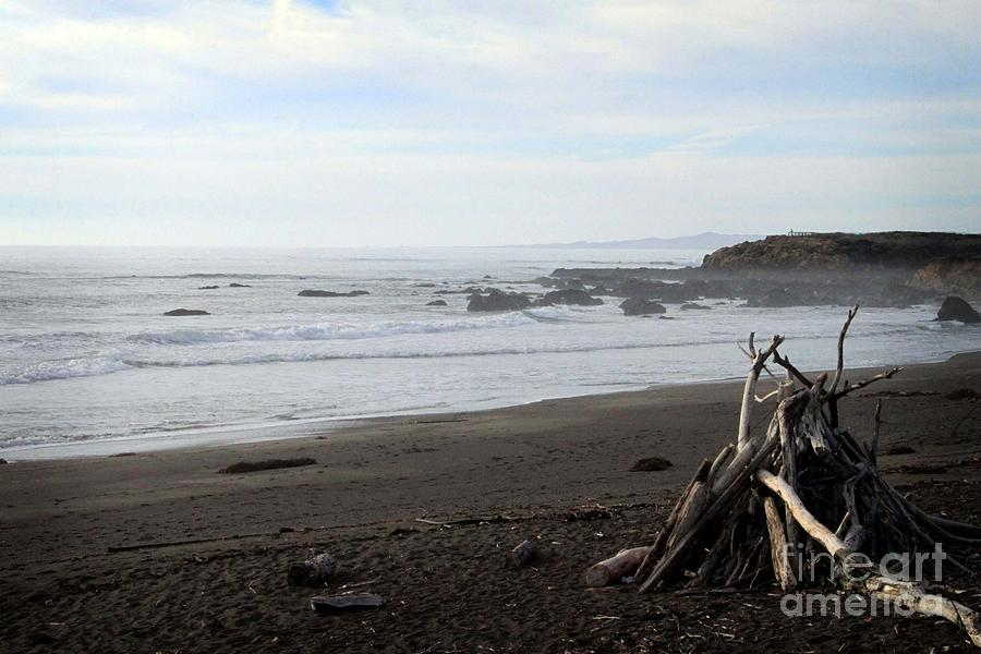 Driftwood And Moonstone Beach Mixed Media  - Driftwood And Moonstone Beach Fine Art Print
