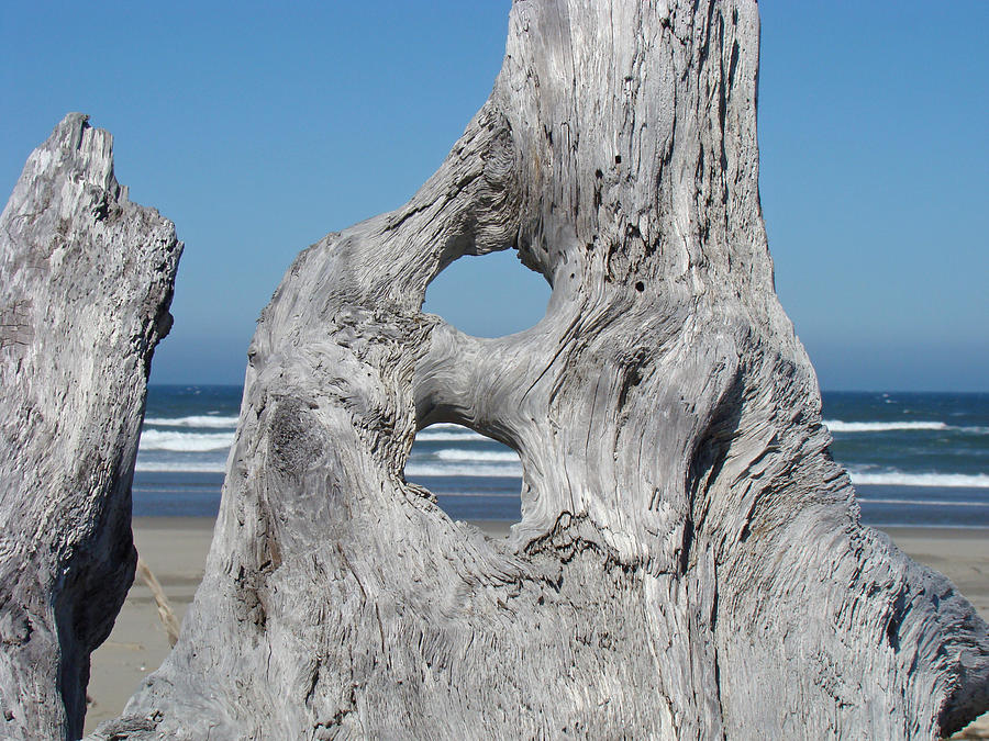 Driftwood Art Prints Coastal Blue Sky Ocean Waves Shoreline Photograph
