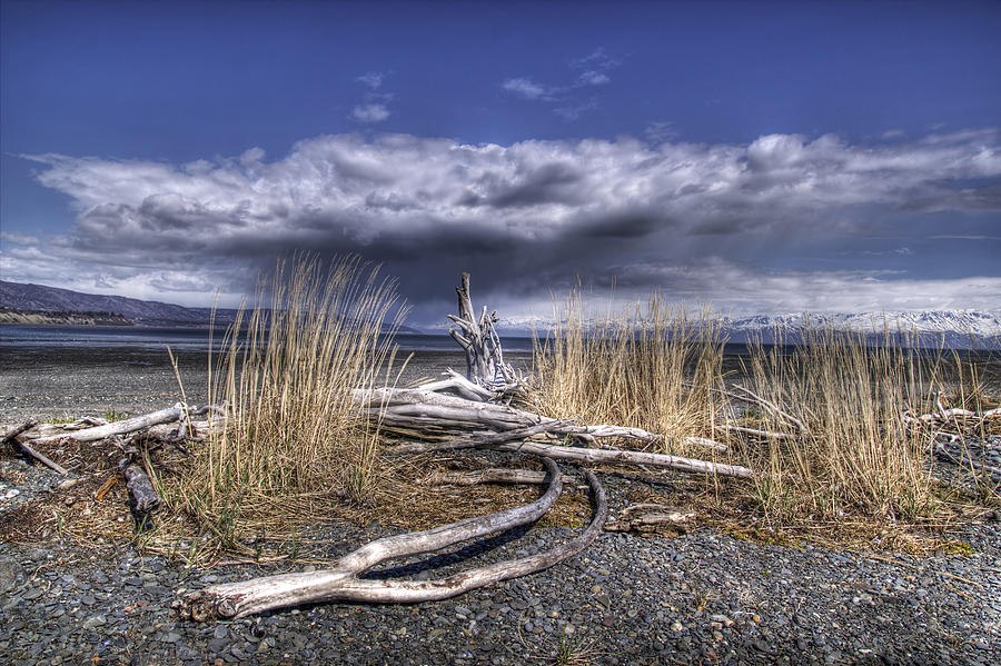 Driftwood By The Sea Photograph