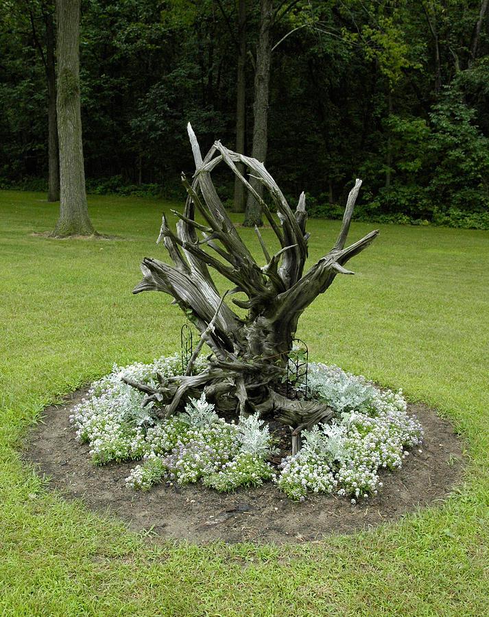 Driftwood garden by lisa wesley Driftwood sculptures for garden